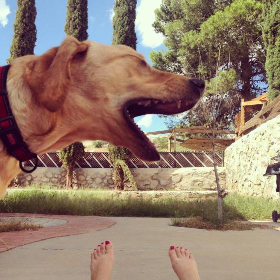 Rajasaurus Rex